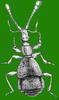 The Pselaphinae (Coleoptera: Staphylinidae) of Bulgaria